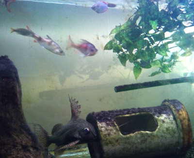 Fishkeeping tips for anybody with tropical freshwater for Clear water fish tank
